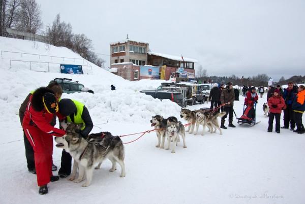 осмотр собак после заезда