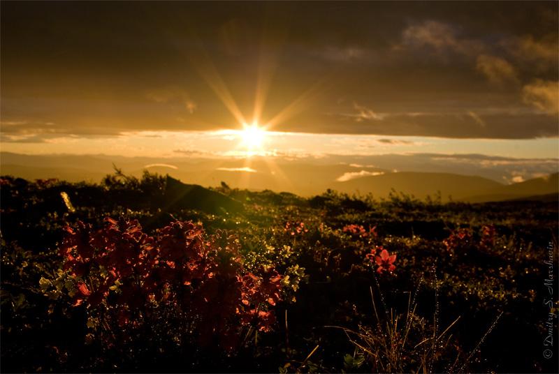 Пробившееся сквозь туман и тучи солнце подсвечивает мокрую от дождя растительность