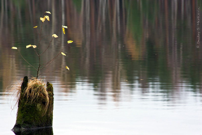 Коркинское озеро, Колтушские высоты, окружающие красоты