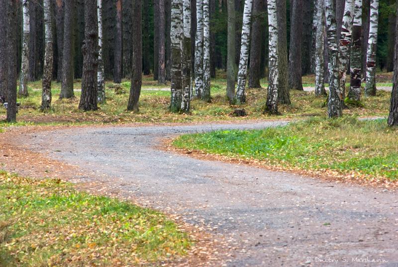 Коркинское озеро, Колтушские высоты, лесные дорожки