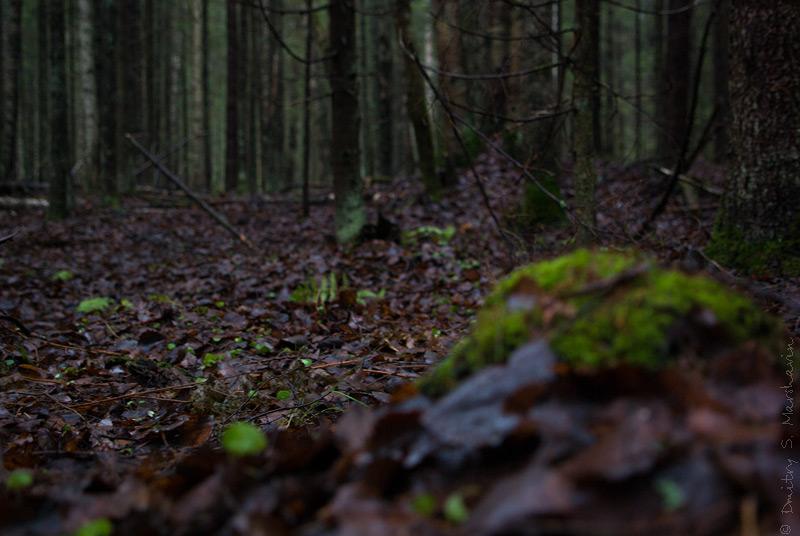 Лес в Лейпясоу